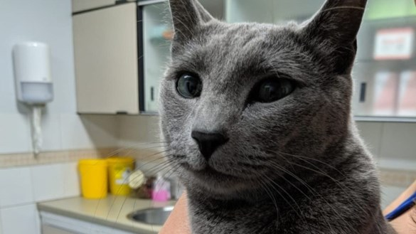 Smokey the cat at vet