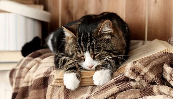Blood Pressure In Cats Pet Advice Medivet Uk