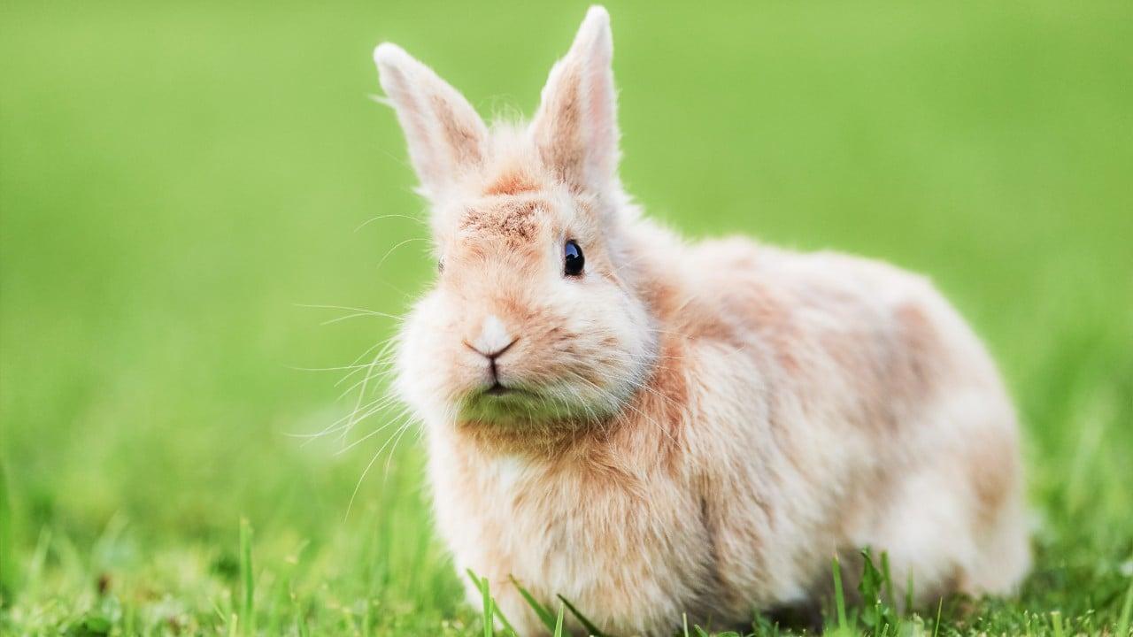 Flystrike In Rabbits Pet Advice Medivet
