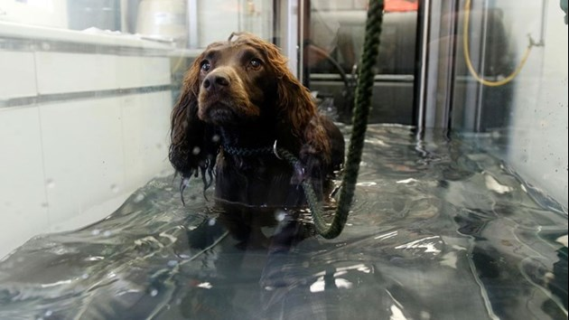 Dog in Hydrotherapy unit