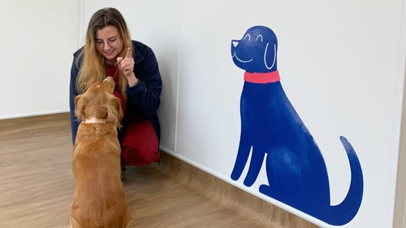 Vet meets dog in reception
