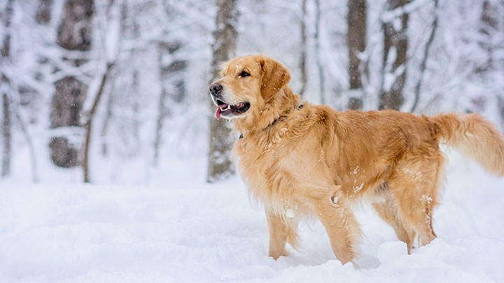 Dog out in the snowy woods